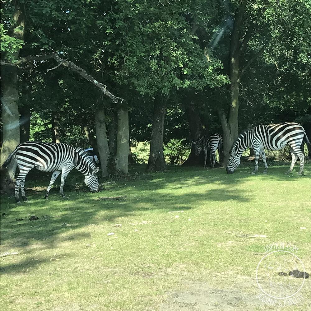 jjsphere_pics_safari-peaugres2