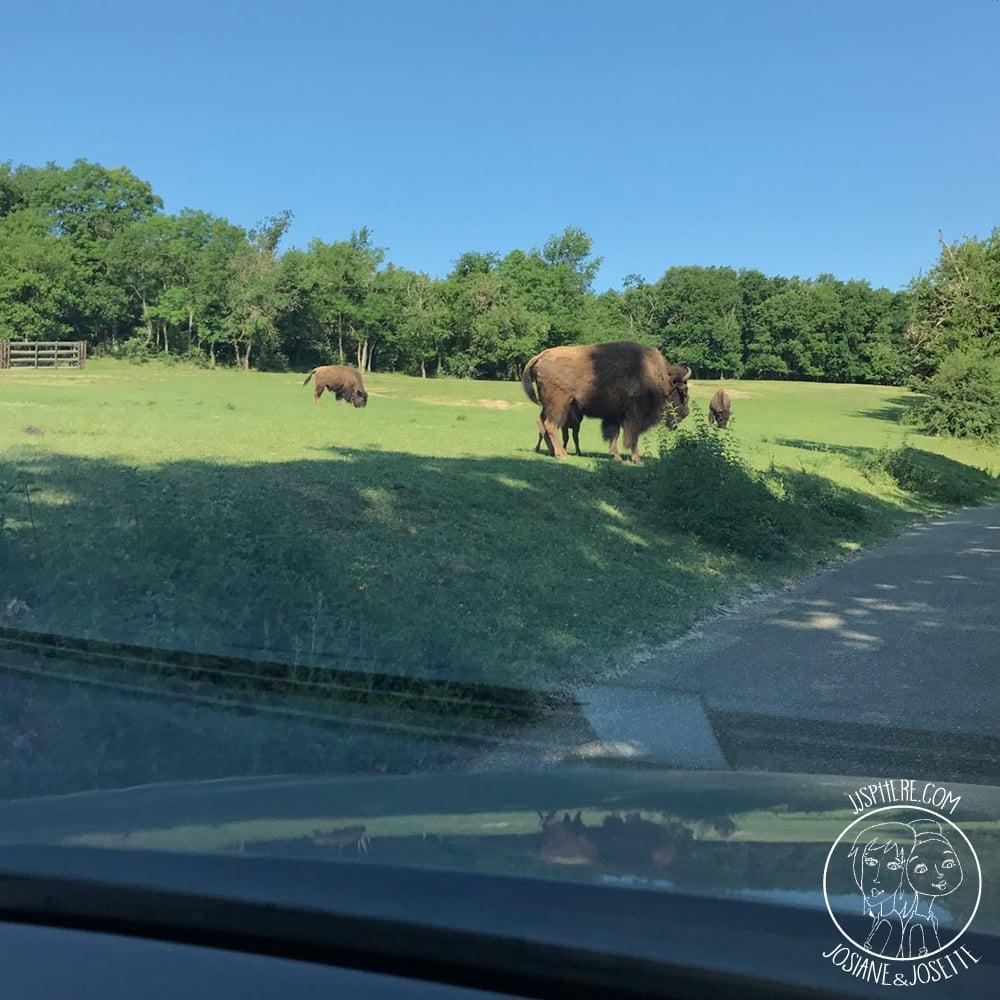 jjsphere_pics_safari-peaugres9